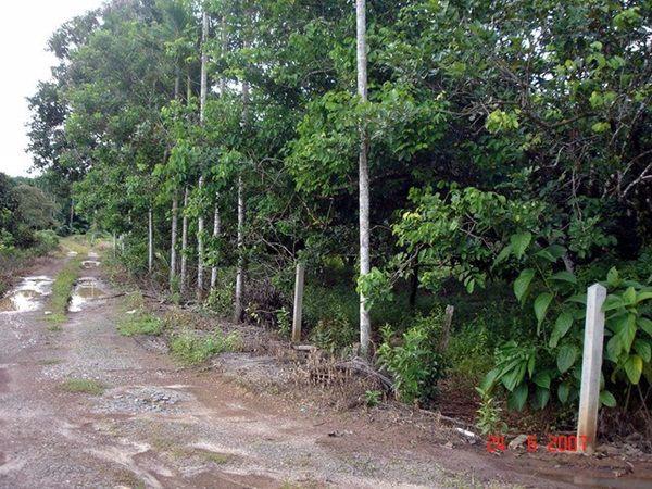 ให้เช่าที่ดินพร้อมบ้าน-มีสวนผลไม้-ปลูกยางในพื้นที่-15-ไร่-ติดถสุขุมวิท-อเขาสมิง-จตราด